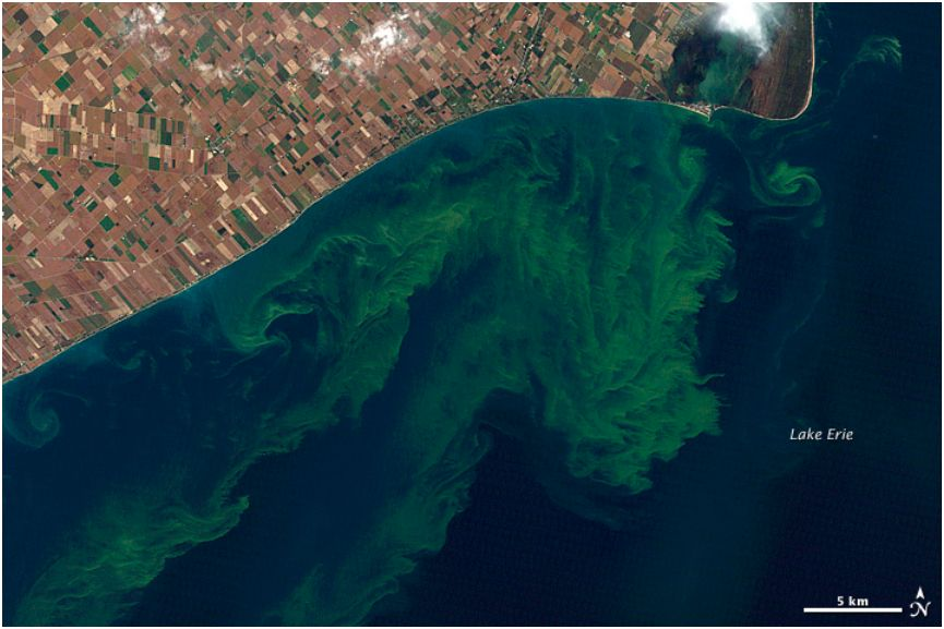 satelite view of algae in lake eerie