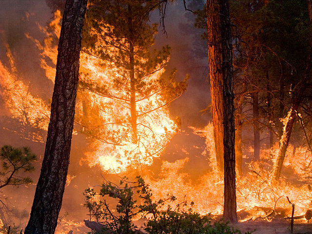 Whitewater-Baldy Complex wildfire, Gila National Forest, New Mexico: Kari Greer | USFS Gila National Forest