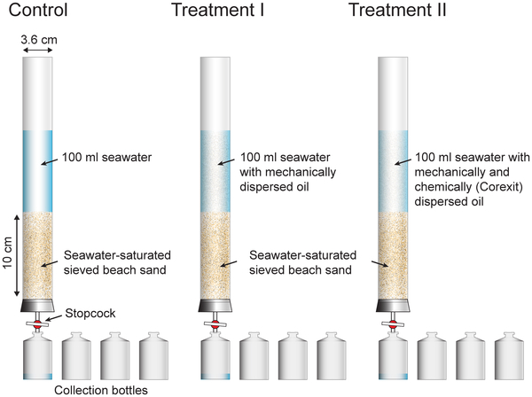 Clean seawater, crude oil dispersed by sonication, or crude oil dispersed by Corexit and sonication were flushed through the sand columns by gravity. The effluent of the columns was collected as a time series in 4 vials each. PLOS ONE doi:10.1371/journal.pone.0050549.g001